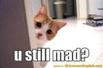 sorry-cute-little-kitty